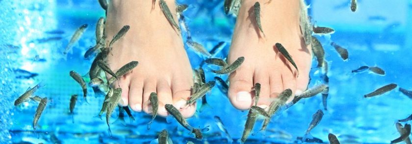 fish-pedicure-2
