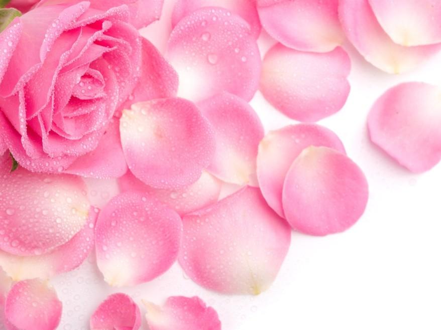 pinkl-pink-rose-petals-x-324121