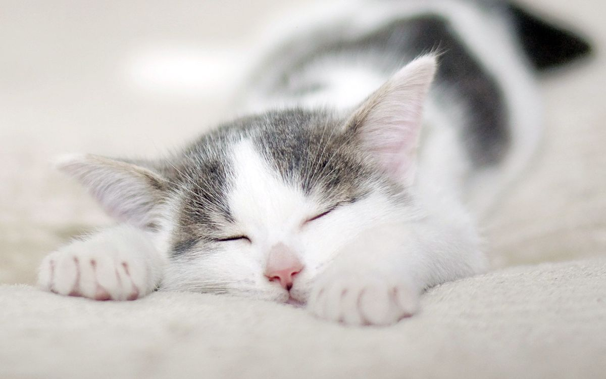 International Cat Day : Things to Learn FromCats