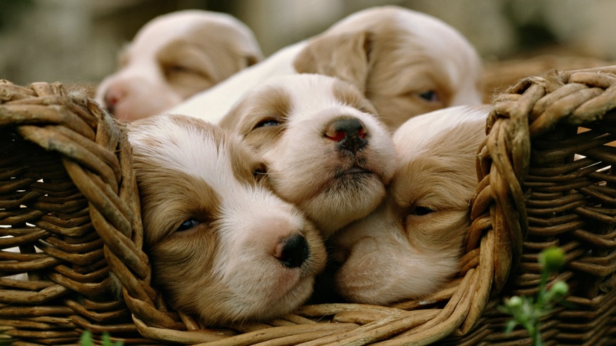 Baby-Animal-Pictures-Wallpapers-053