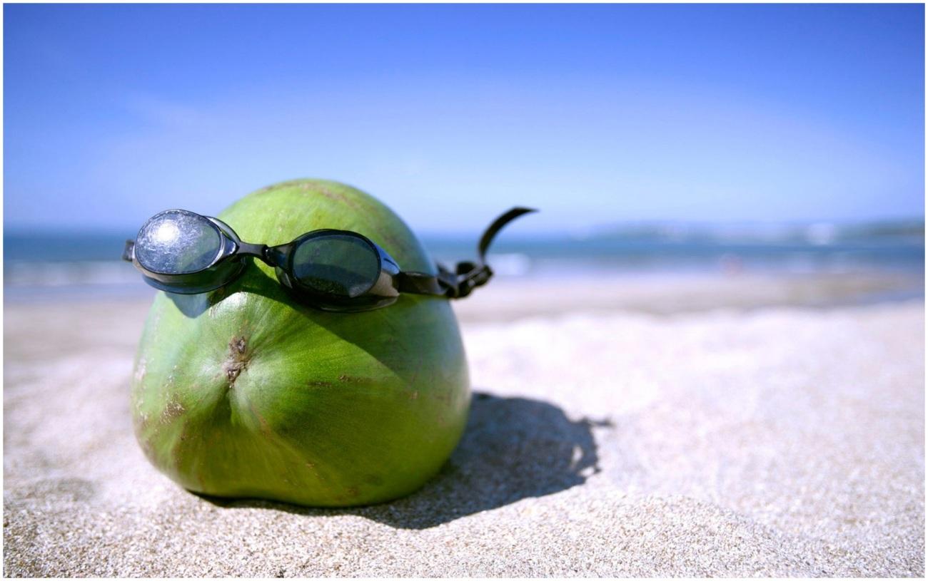 SUMMER-FUN-COCONUT-FRUIT-FUNNY-HD-WALLPAPER