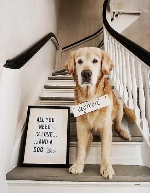Cute-Dog-dogs-33531471-488-628
