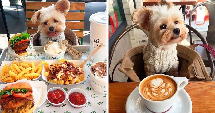 rescue-dog-restaurants-food-instagram-popeyethefoodie-fb2__700-png.jpg